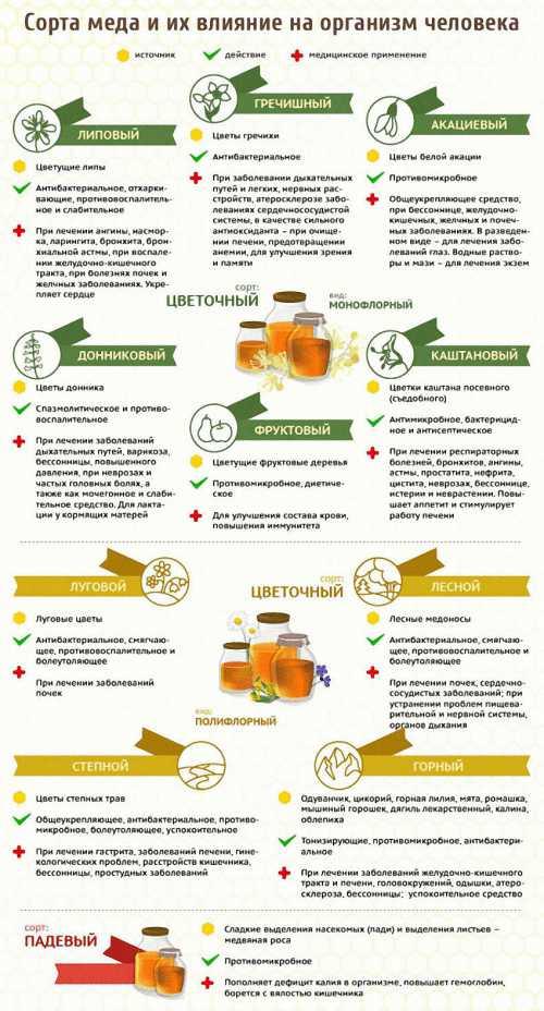 полезные овощи: самые важные продукты для здоровья человека